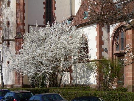 März 2011 Durlach + Turmberg 016