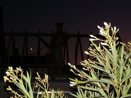 Sept-Okt 2011 GartenGem 002