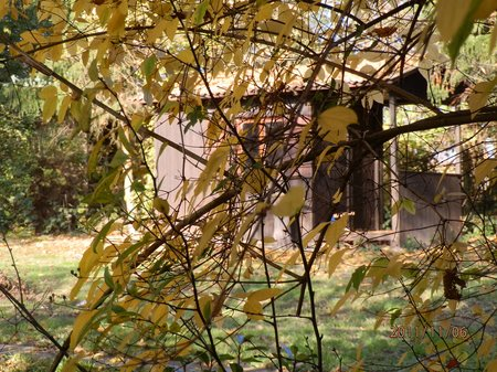 November 2011 goldener Herbst - Garten 029