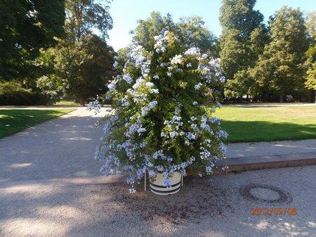 September 2012 - 08 - Olymp 81 Bruchsal-Schloss + Micha-elisberg 002