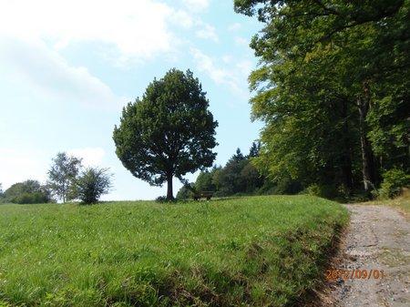 September2012 - 1 - Olymp 810 - Obrigheim + Odenwald + Obergromb 108