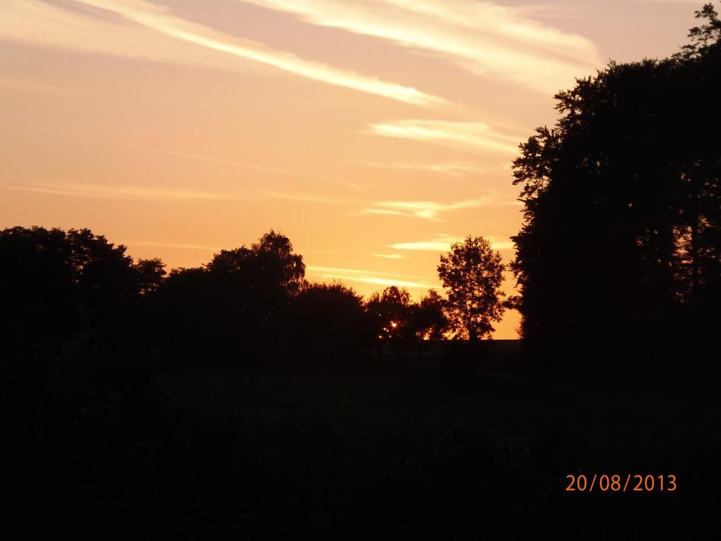 Sallenbusch Abendsonne