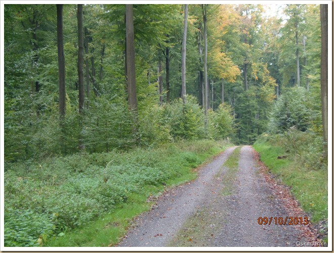Wössinger Waldweg 2