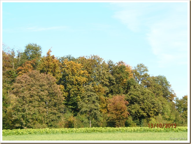 Baumgruppe im Herbst