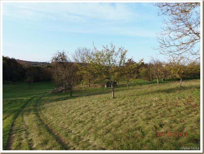 Naturschutzgebiet 12 Morgen