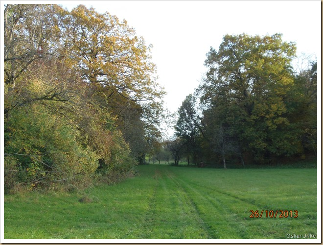 Wössinger Obstbaumwiesenlandschaft