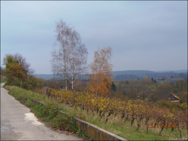 November 2013 - 15 - Olymp 810 - Weing-Weinb Wald 014