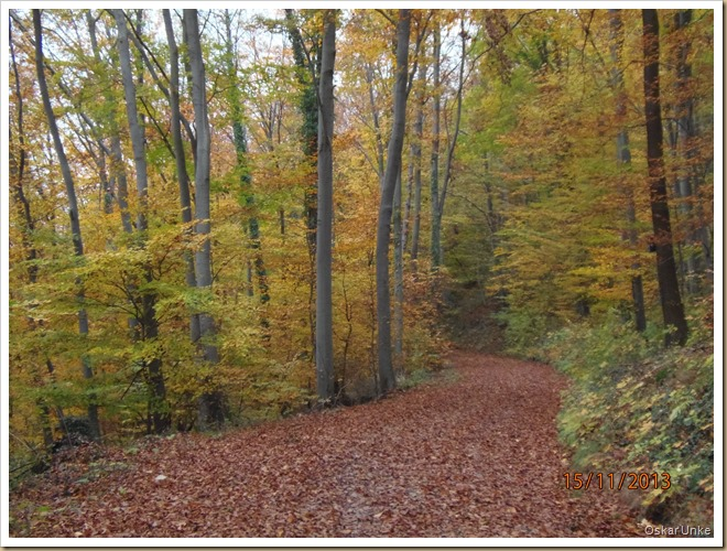 Weingarten Waldweg