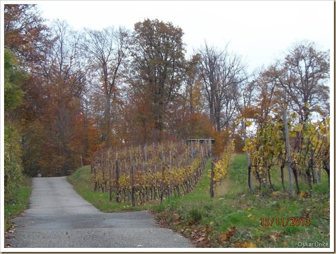 November 2013 - 15 - Olymp 810 - Weing-Weinb Wald 044