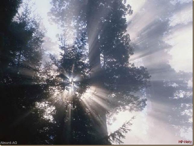 Waldlichtspiele