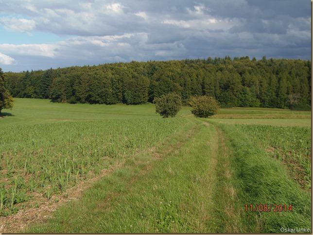 Obergrombacher Feldflur