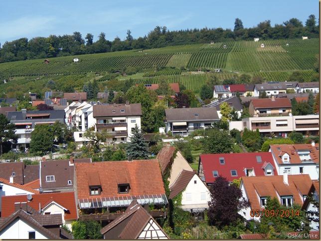 Weingarten + Weinberge