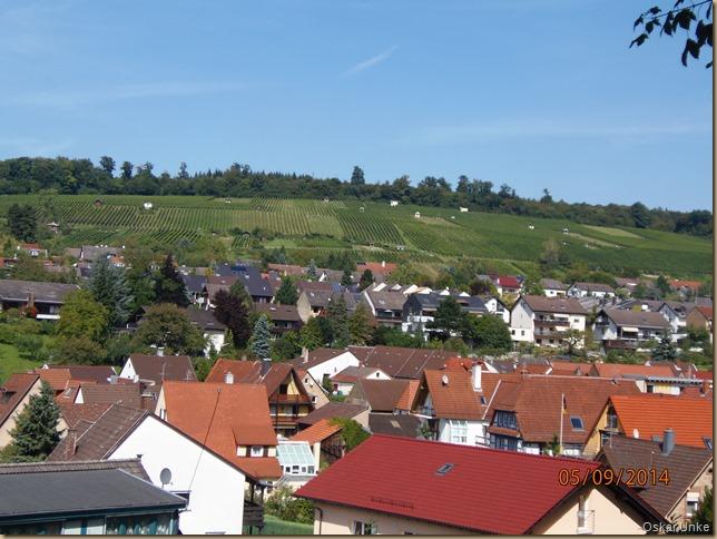 Weingarten mit Weinbergen