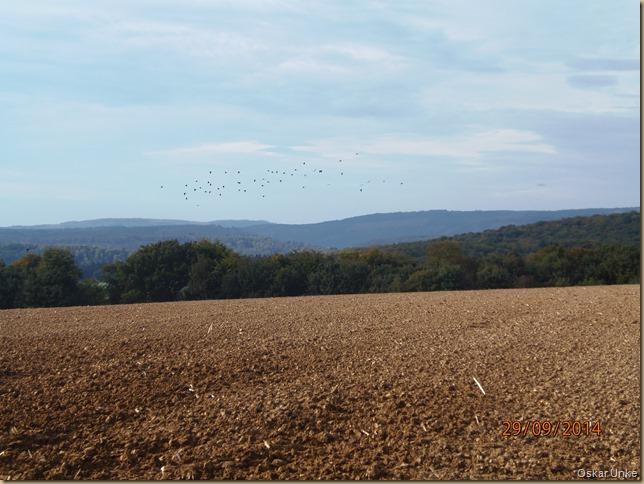 Herbstkrähen über dem Schreckhof