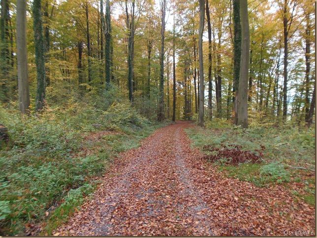 Wössinger Wald