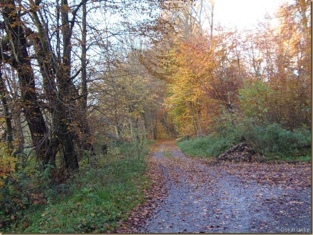 Wössinger Waldweg