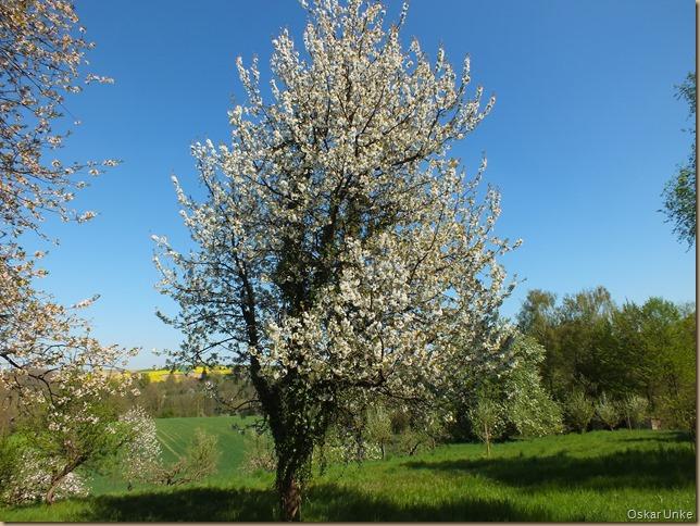 Frühling in Walzbachtal