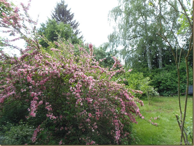 Naturgarten im Frühling