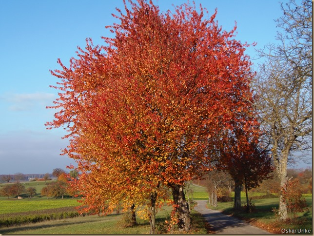 Herbstfarbenpracht