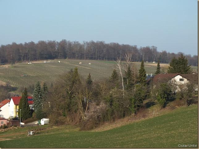 Blick auf Weinberge in Obergrombach