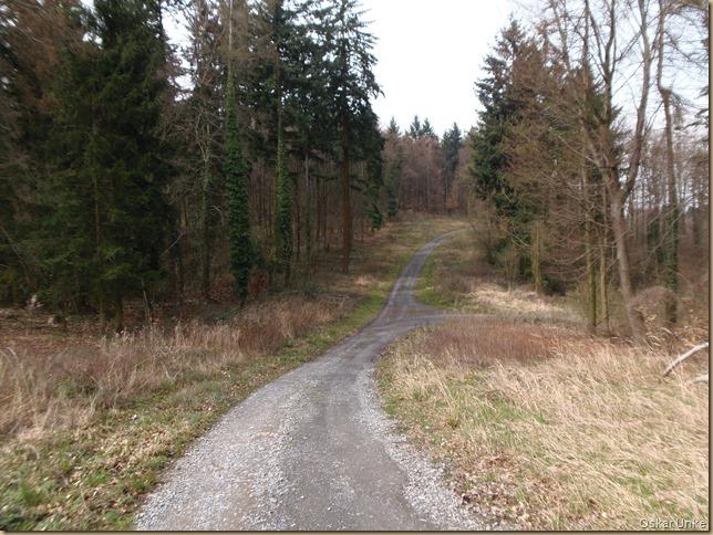 Waldweg im Weingartener Wald
