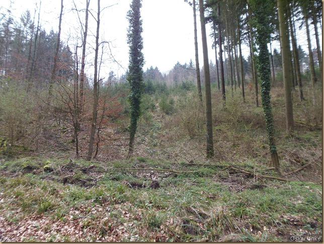 Waldlandschaft Streichental