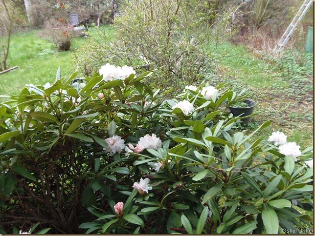 April 2016 - 03 - Olymp 810 - Garten 005