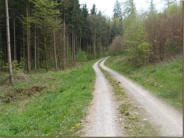 Waldwege = Gedankenwege