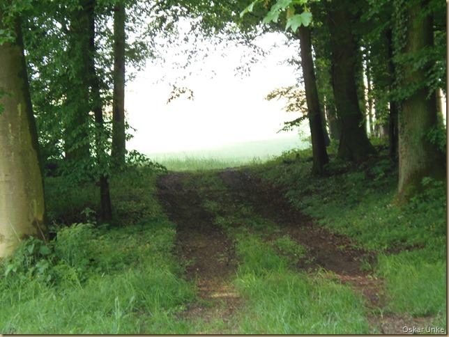 Wald und Wiesenlandschaft