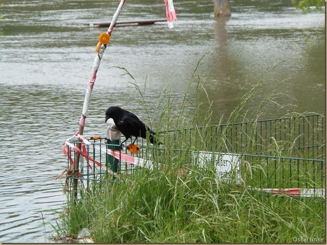 Mai 2016 - 15 - Pfingstsonntag Olymp 810 - Rheinhochwasser 008