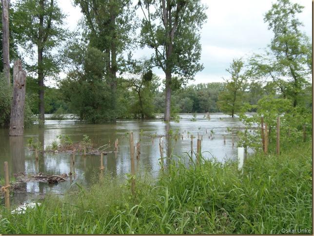 überflutete Rheinauen