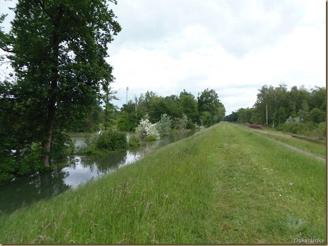 Rheinhochwasserdamm Richtung Nord