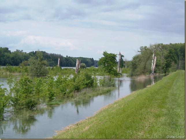 Rheinauenlandschaft
