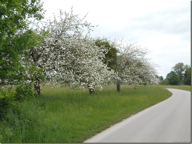 Weg nach Linkenheim