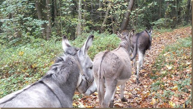 November 2013 - 01 - Fuji 30 - Weing-Grötz Wald 024