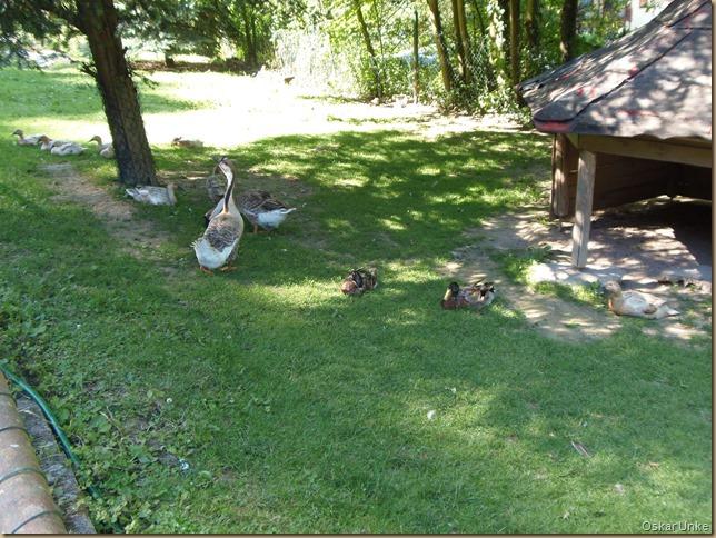 Weingarten Vogelpark