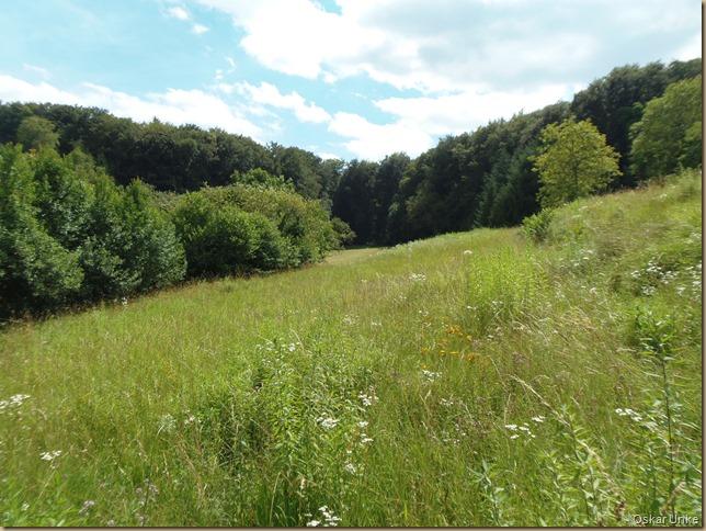 Waldwiesen