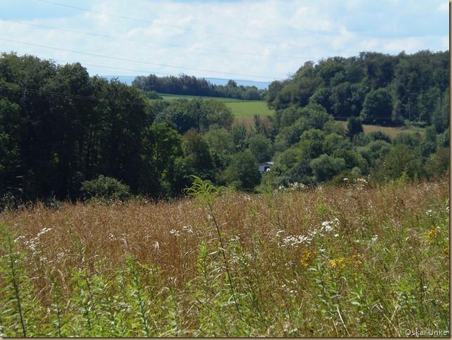 Naturwiesen