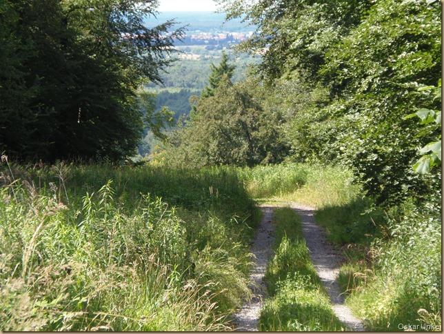 liebliche Waldwege