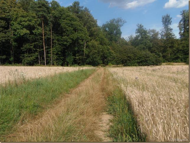 Waldwiesenweg
