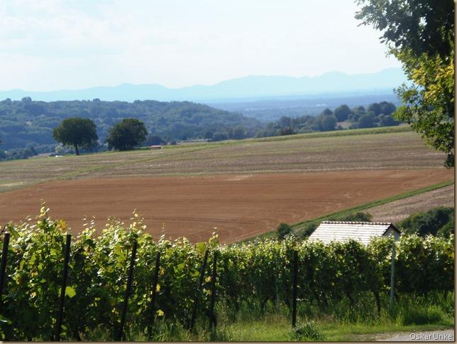 Blick von den Jöhlinger Weinbergen