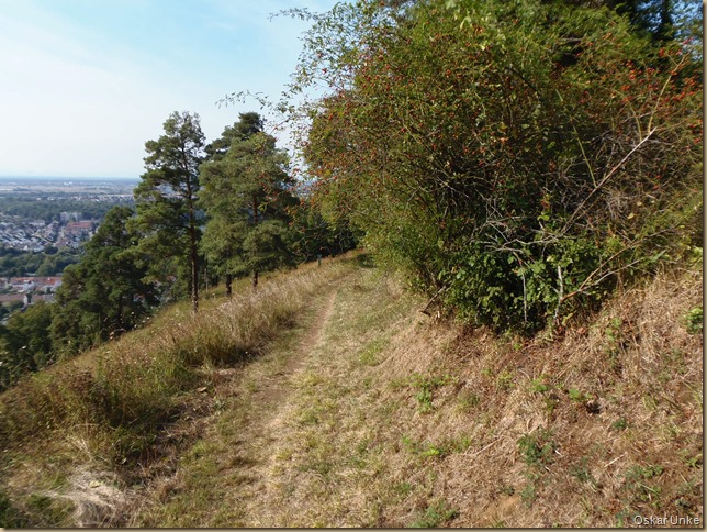 Höhenweg Kaiserberg