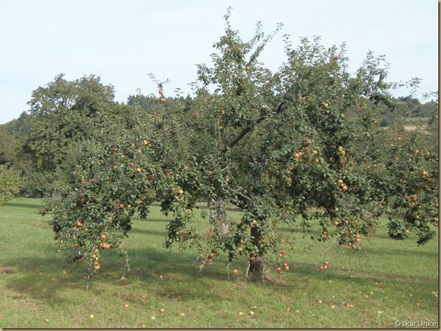 Obstbaumwiesen bei Berghausen