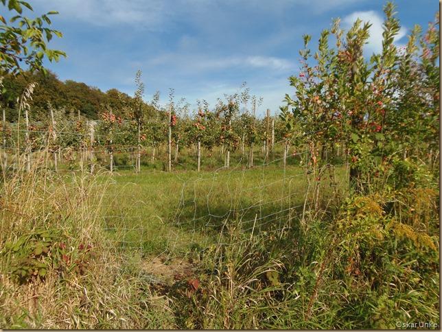 Jöhlinger Apfelplantagen