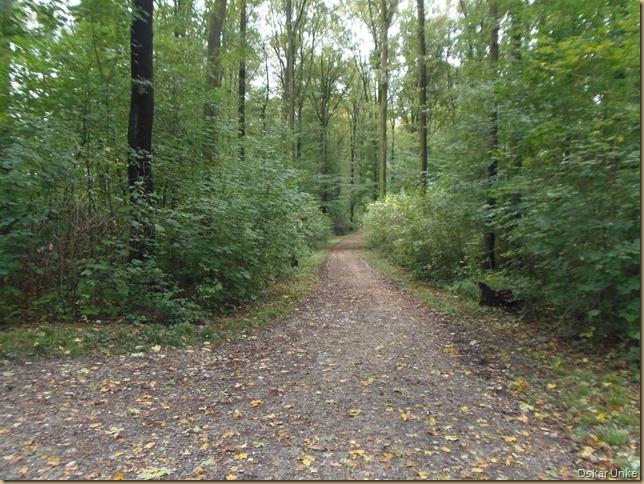 Der Wald noch relativ grün