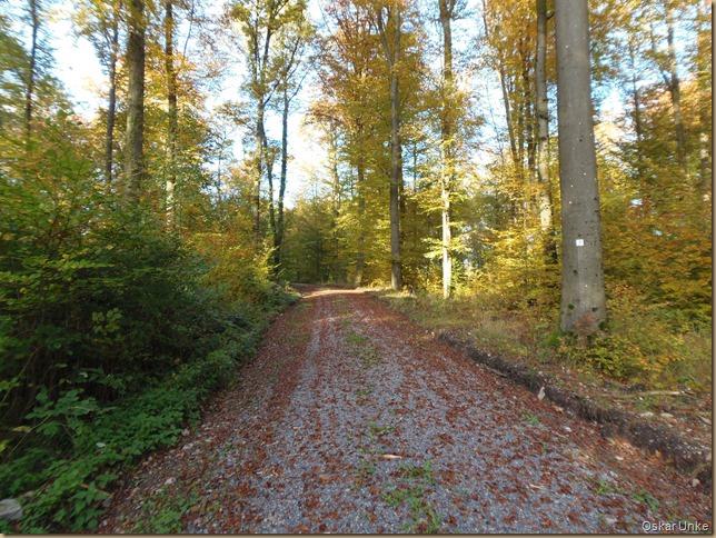 idyllische Waldwege
