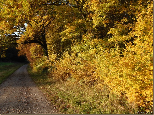 goldene Herbstfarbenpracht