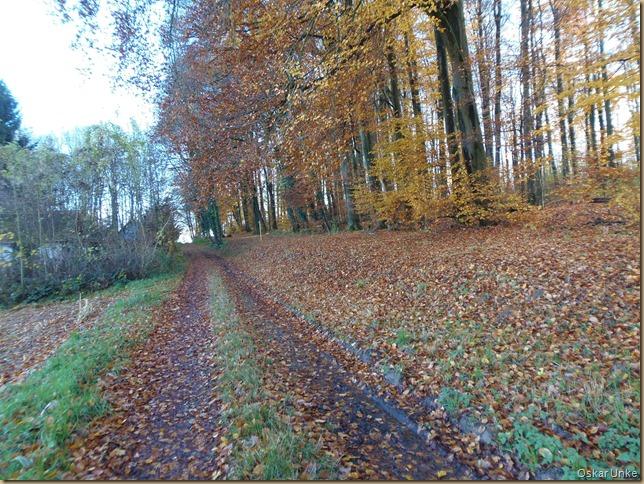 Walzbachtäler Waldweg