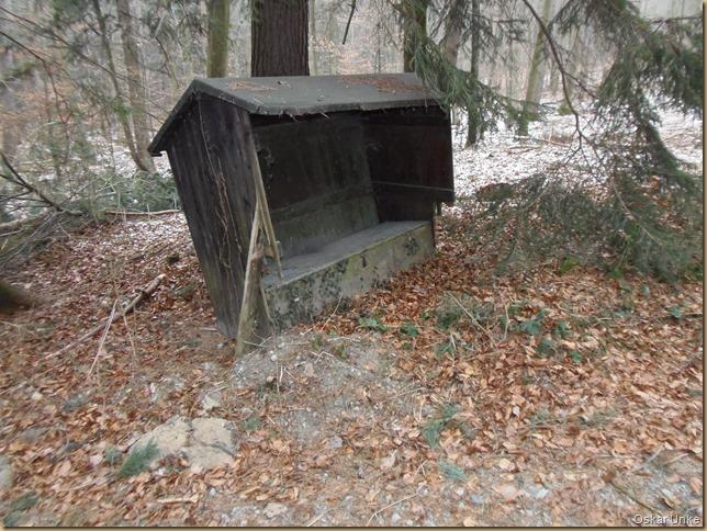 Im Wössinger großen Wald