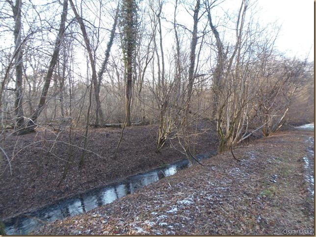 Bruchwald im Weingartener Moor
